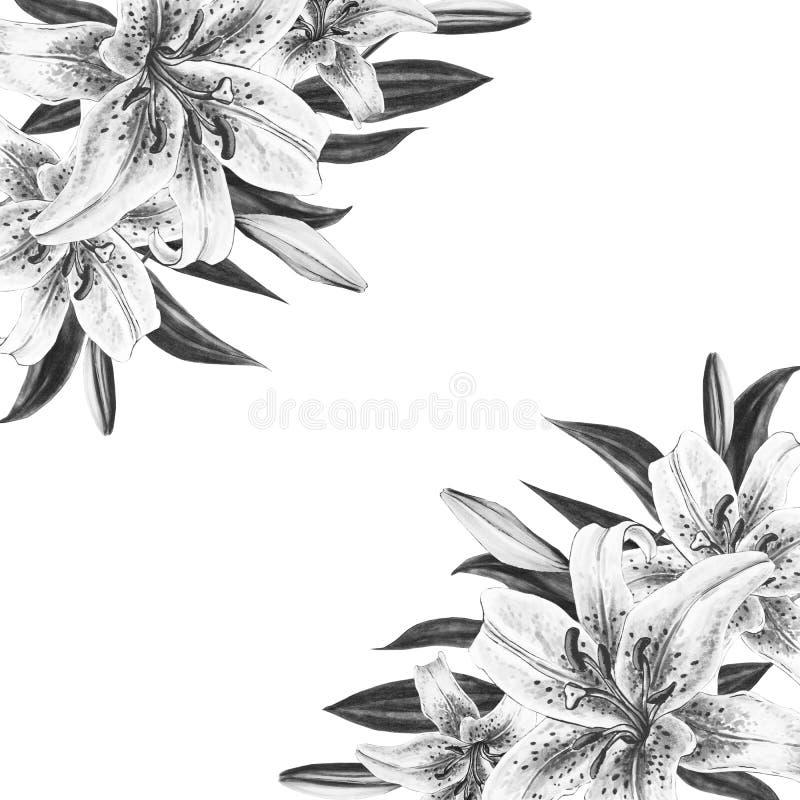 Bella struttura in bianco e nero dell'angolo del giglio Mazzo dei fiori Stampa floreale Disegno dell'indicatore fotografia stock libera da diritti