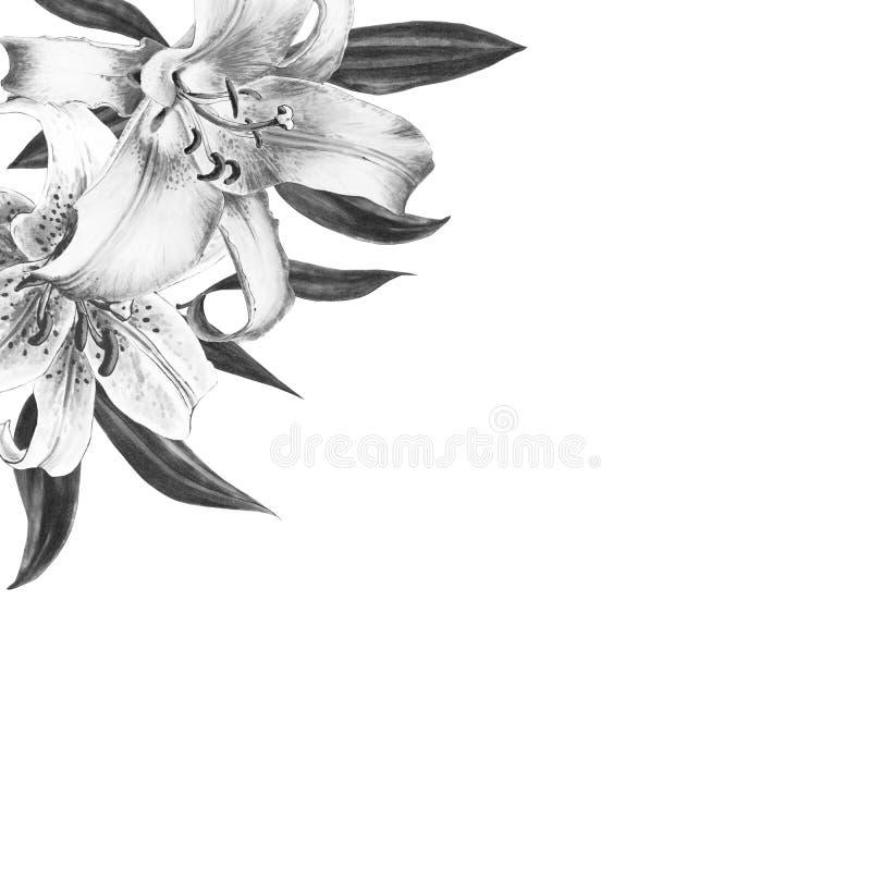 Bella struttura in bianco e nero dell'angolo del giglio Mazzo dei fiori Stampa floreale Disegno dell'indicatore illustrazione di stock