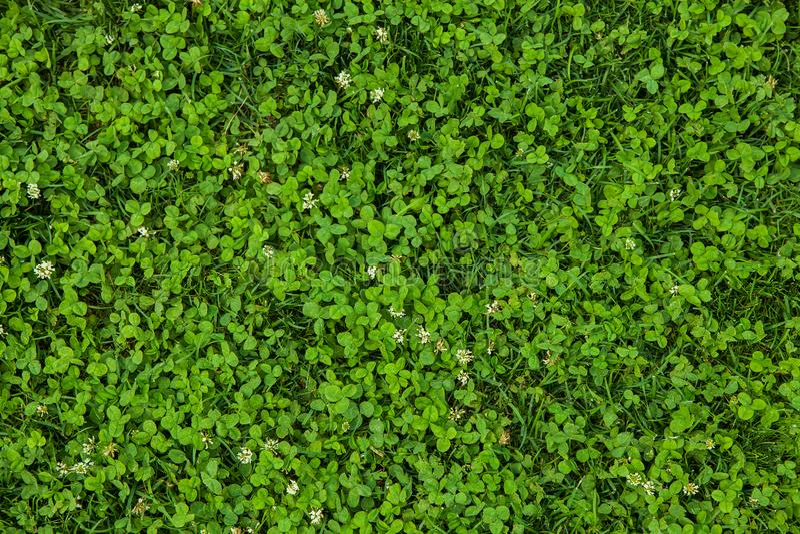 Bella struttura dell'erba verde immagini stock libere da diritti