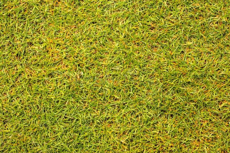 Bella struttura dell'erba verde dal campo da golf fotografia stock libera da diritti