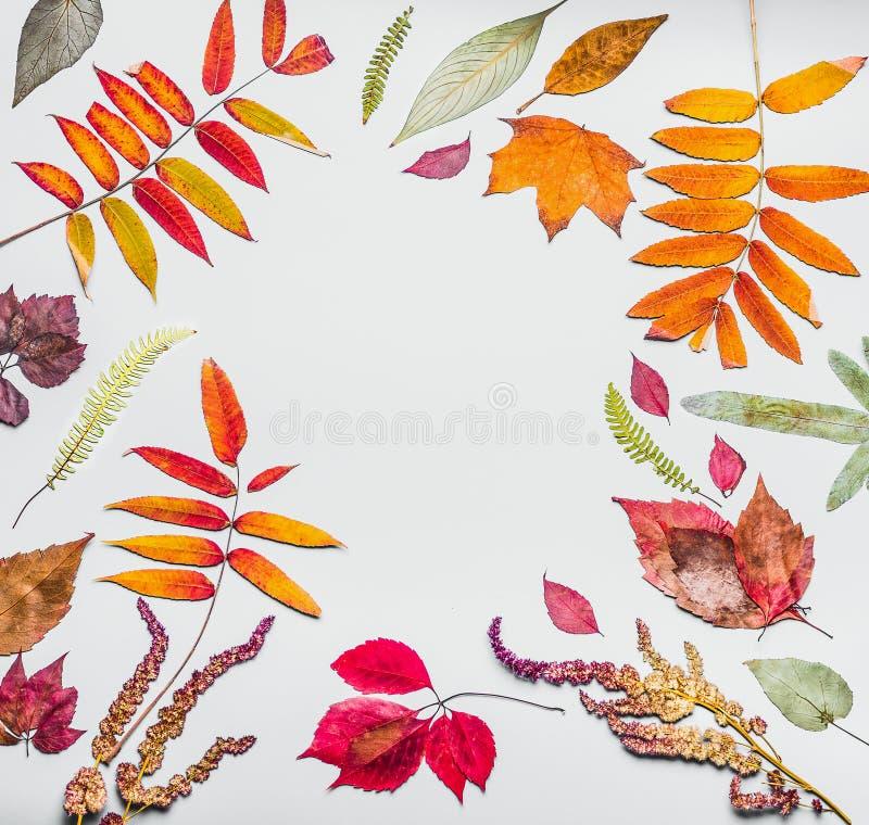 Bella struttura di autunno fatta di varie foglie di autunno secche variopinte Fondo della natura di caduta fotografie stock libere da diritti