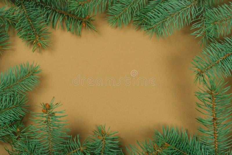 Bella struttura verde dei rami del pino per testo fotografia stock