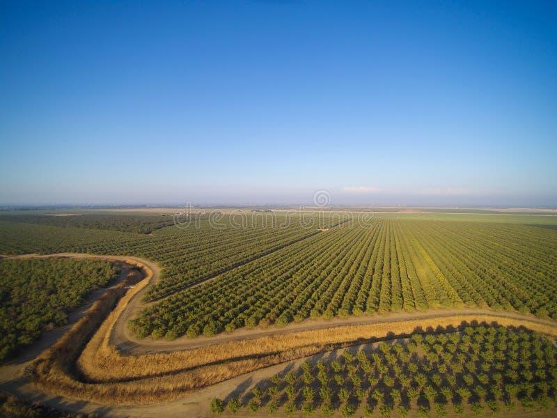 Bella vista aerea di grande frutteto della mandorla fotografie stock libere da diritti