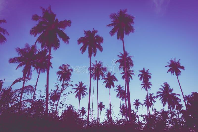 Bella vista all'aperto con l'albero tropicale del cocco sul cielo a tempo di tramonto immagini stock libere da diritti