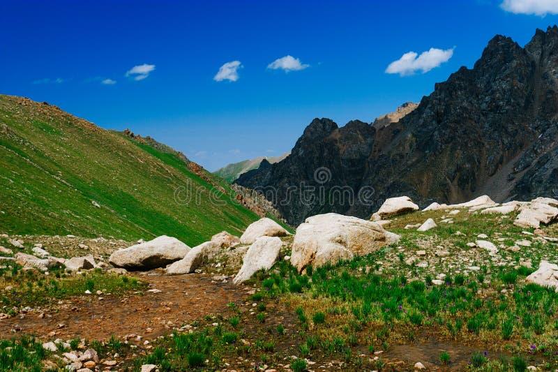 Bella vista dei prati alpini immagini stock libere da diritti