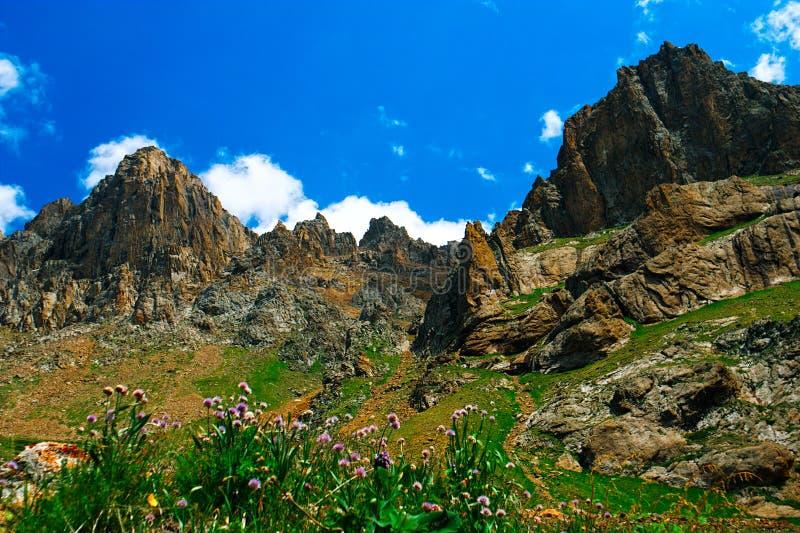 Bella vista dei prati alpini fotografia stock libera da diritti