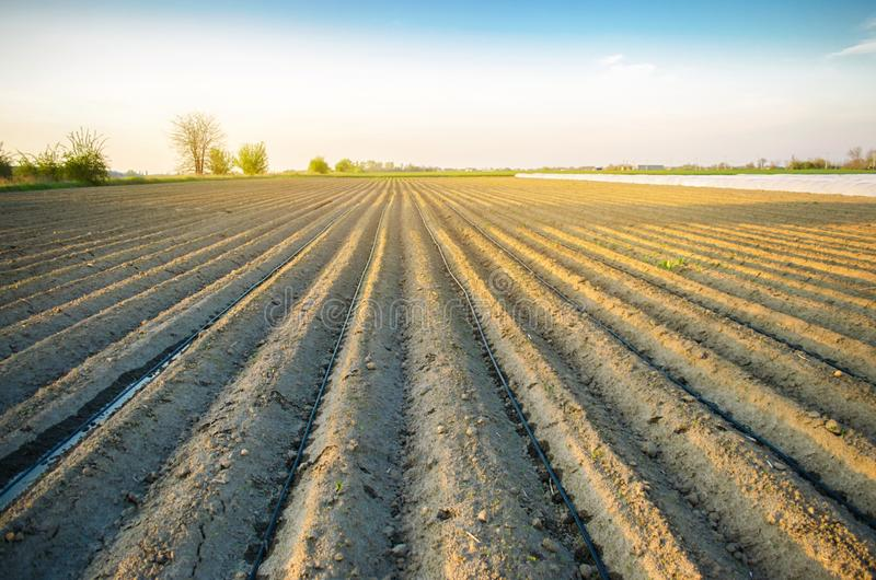 Bella vista del campo arato un giorno soleggiato Preparazione per la piantatura delle verdure agricoltura Terreno coltivabile Sel fotografia stock libera da diritti
