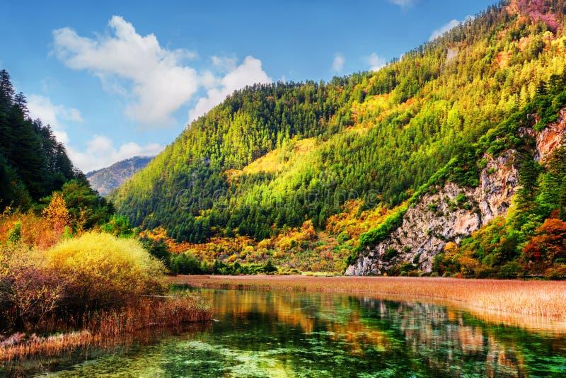 Bella vista del fiume scenico con acqua di cristallo fotografia stock libera da diritti