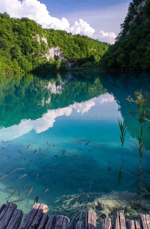 Bella vista del lago con il pesce nella chiara acqua del turchese, negli alberi delle piante verdi e nelle rocce delle montagne n fotografia stock