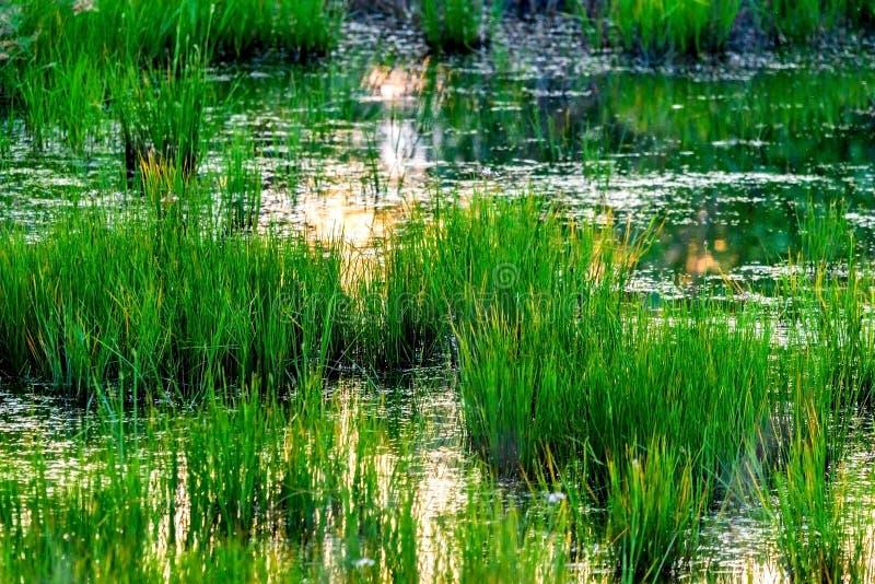 Bella vista della campagna swapy con vegetazione ed i cottage fertili verdi fotografia stock