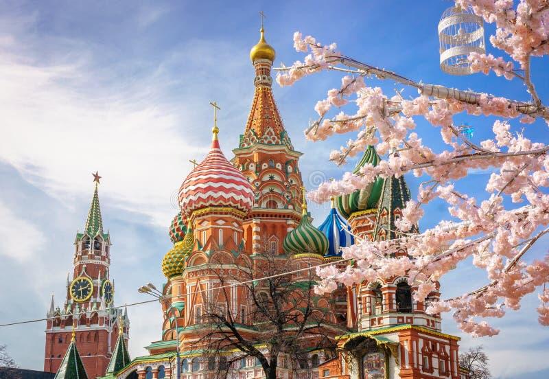 Bella vista della cattedrale del ` s del basilico della st La fioritura di Sakura a Mosca Stagione di sorgente La molla della Rus fotografia stock