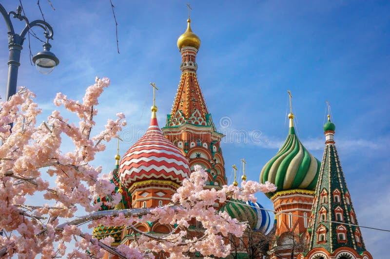 Bella vista della cattedrale del ` s del basilico della st La fioritura di Sakura a Mosca Stagione di sorgente La molla della Rus fotografia stock libera da diritti