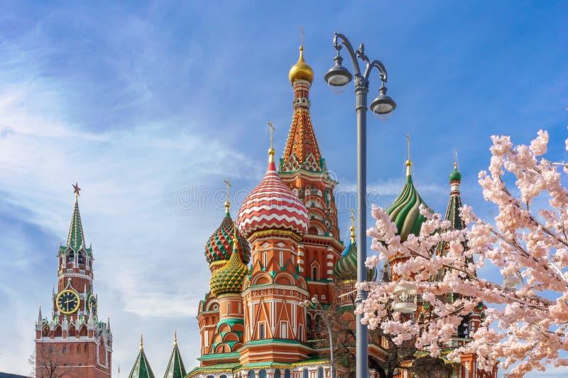 Bella vista della cattedrale del ` s del basilico della st La fioritura di Sakura a Mosca Stagione di sorgente La molla della Rus immagini stock libere da diritti