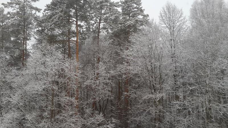Bella vista della foresta fotografia stock