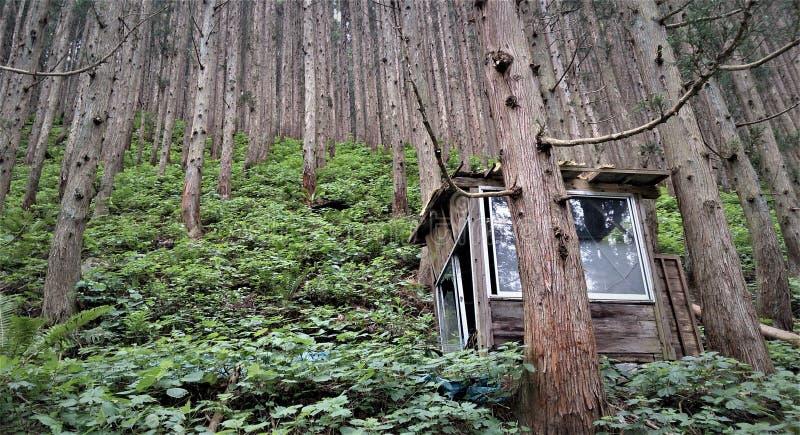 Bella vista della foresta di Nagano nel Giappone fotografie stock