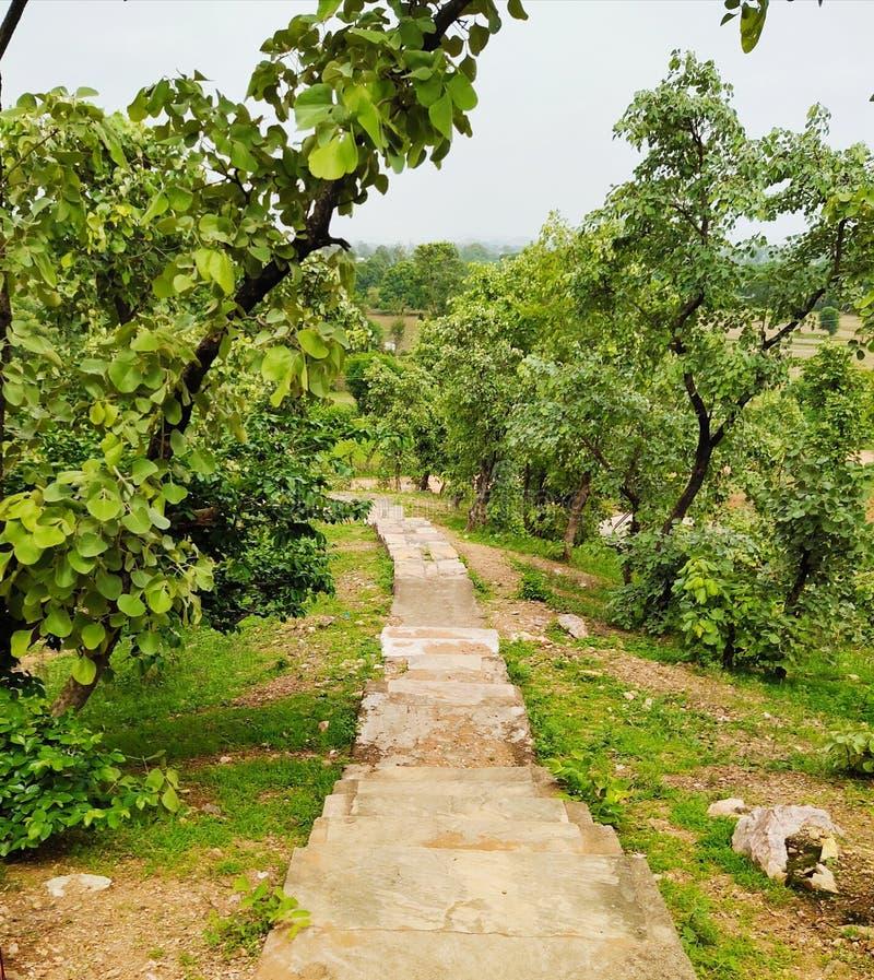 Bella vista della giungla alla mattina Piante verdi fotografie stock