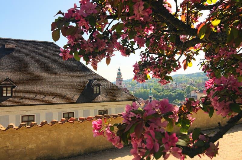 Bella vista della molla alla chiesa ed al castello in Cesky Krumlov, repubblica Ceca Fioritura dei fiori di Sakura fotografia stock libera da diritti