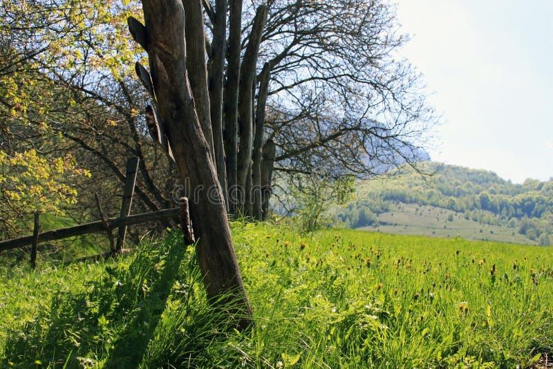 Bella vista della natura in primavera immagini stock libere da diritti