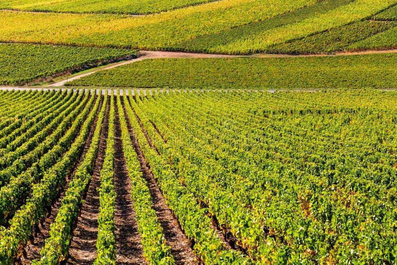 Bella vista delle vigne in Borgogna, Francia fotografia stock