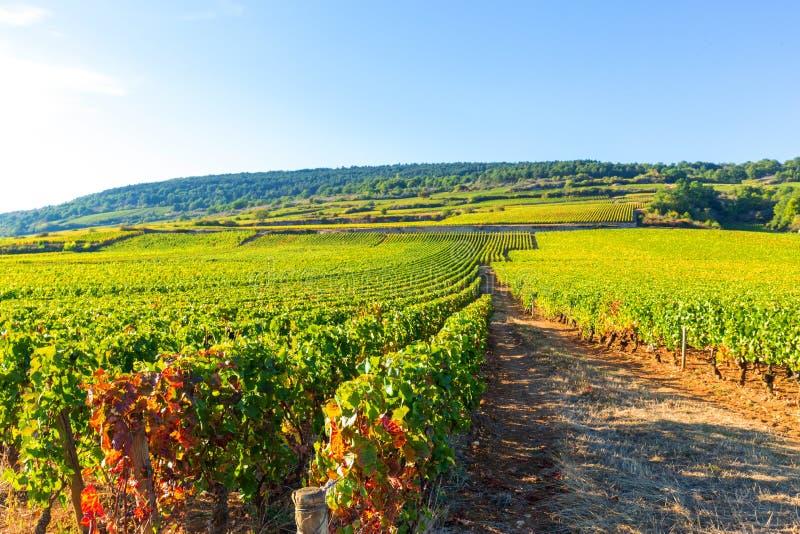 Bella vista delle vigne in Borgogna, Francia immagini stock libere da diritti