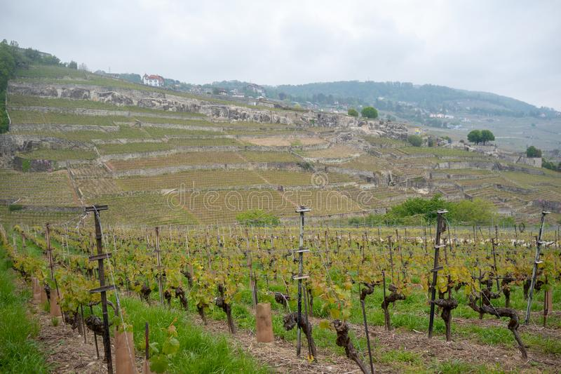 Bella vista delle vigne nei villaggi rurali della Svizzera sul fondo della montagna e del cielo nuvoloso immagine stock