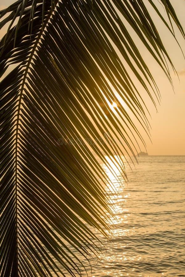 Bella vista di una spiaggia tropicale con foglia di palma fotografia stock libera da diritti