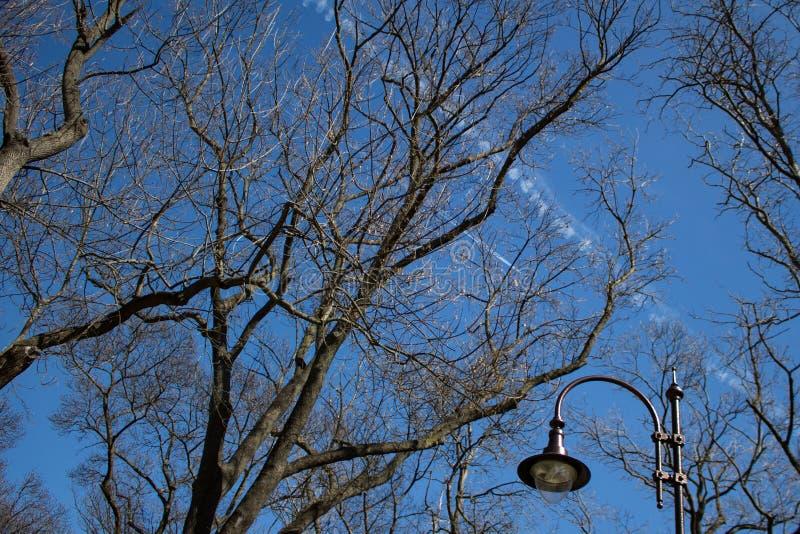 Bella vista fra i rami di albero ed i precedenti del cielo blu immagine stock