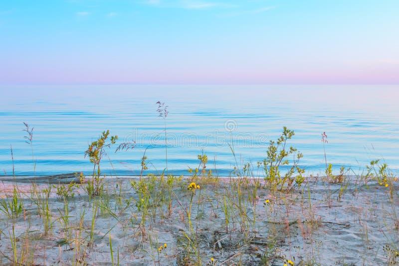 Bella vista sul mare di tramonto con i fiori sulla sabbia immagini stock libere da diritti