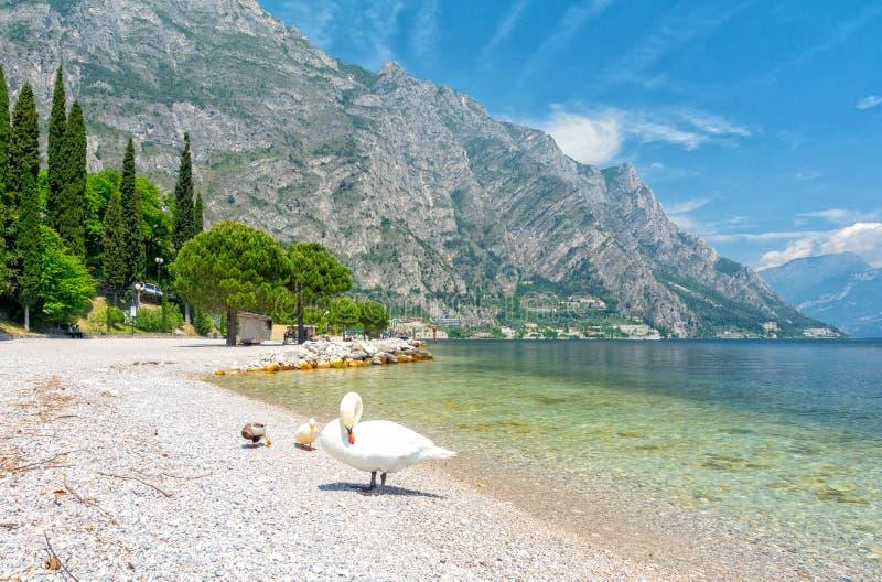 Bella vista sulla polizia del lago con il cigno in polizia del sul di Limone, Italia fotografia stock libera da diritti