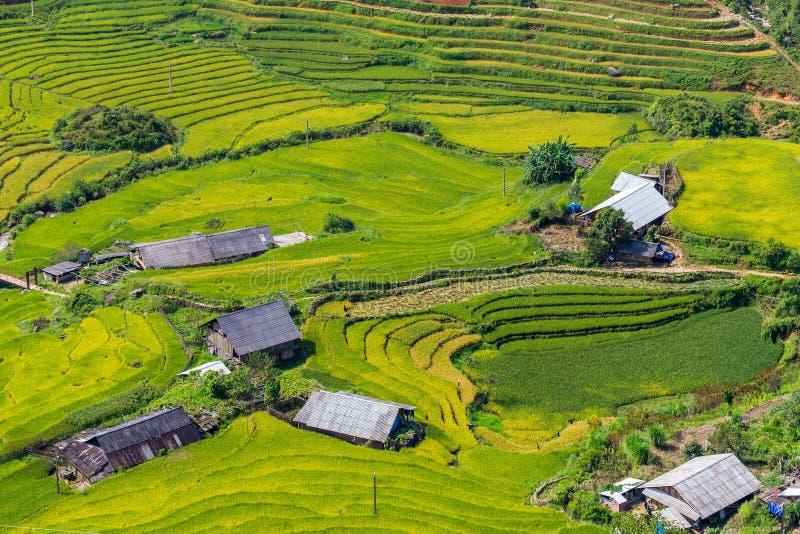 Bella vista, terrazzi del giacimento del riso a Sapa, Vietnam immagine stock libera da diritti