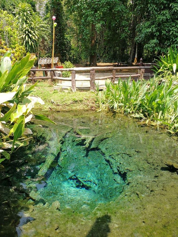 Bella vita che coltiva in Chiang Mai immagine stock