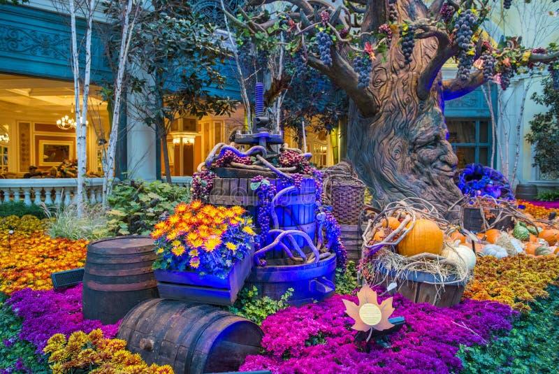 Bellagio Hotel Conservatory & Botanical Gardens Editorial Photo