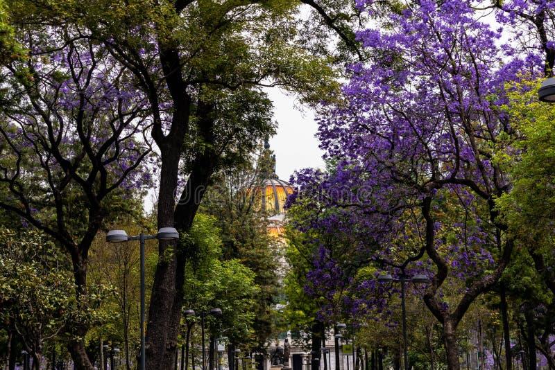 Bellas artes hidden between the trees stock photos