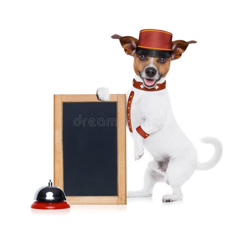 Bellboy pies zdjęcia stock
