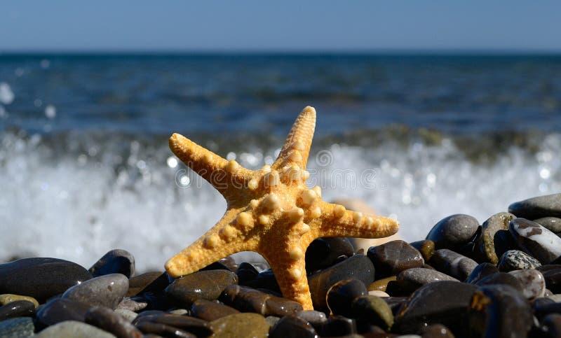 Belle étoile photographie stock