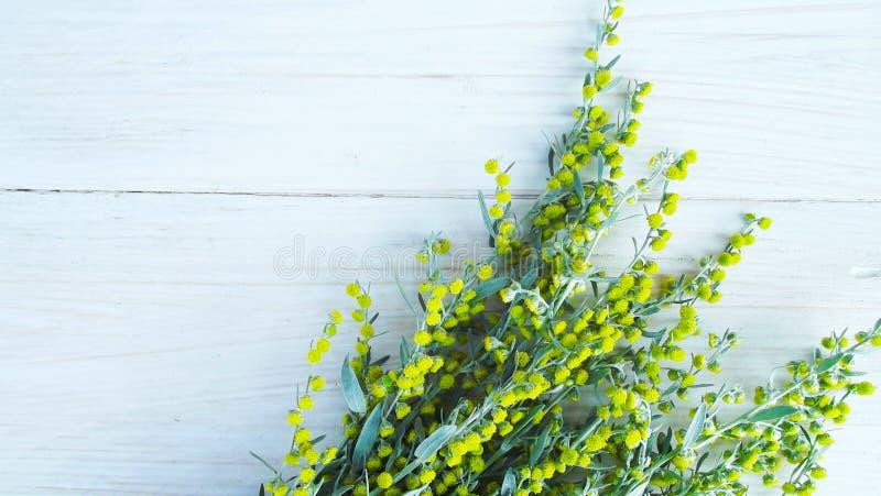 Belle absinthe fleurissante photo libre de droits