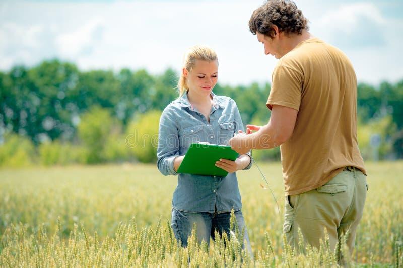 Belle agronome de fille avec la position de carnet dans le domaine de blé et regarder la culture dans le blé de mains d'homme de  photos libres de droits