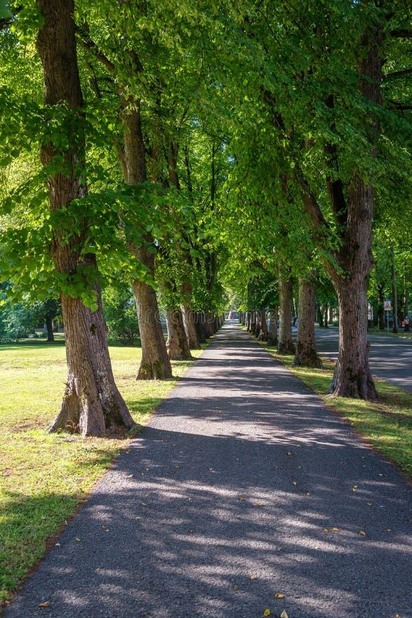 Belle allée d'été en parc avec de vieux arbres images stock