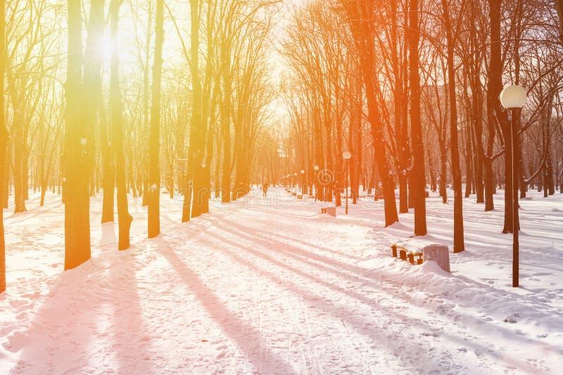 Belle allée d'hiver images stock