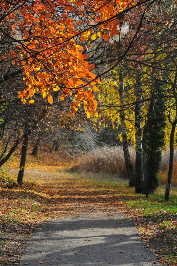 Belle allée romantique en parc d'automne avec les arbres colorés images libres de droits