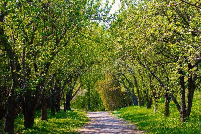 Belle allée verte de parc au printemps image stock