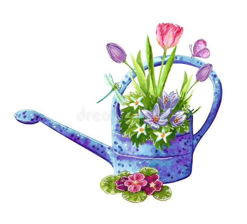 Belle aquarelle, bouquet tôt de fleurs de jardin de ressort dans une boîte d'arrosage illustration libre de droits