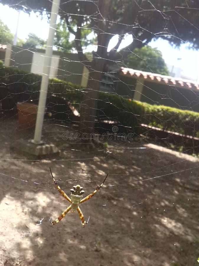 Belle araignée images stock