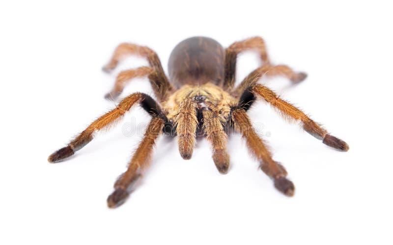 Belle araignée photo stock