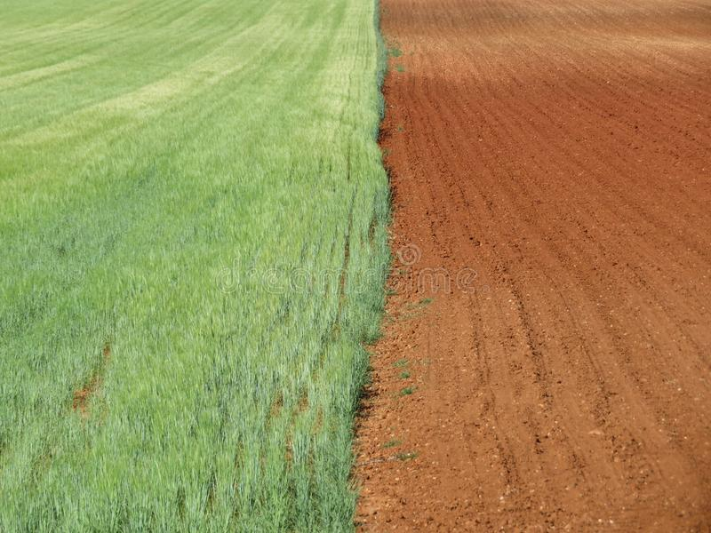Belle attente et sec de champ de grain moissonnés images stock
