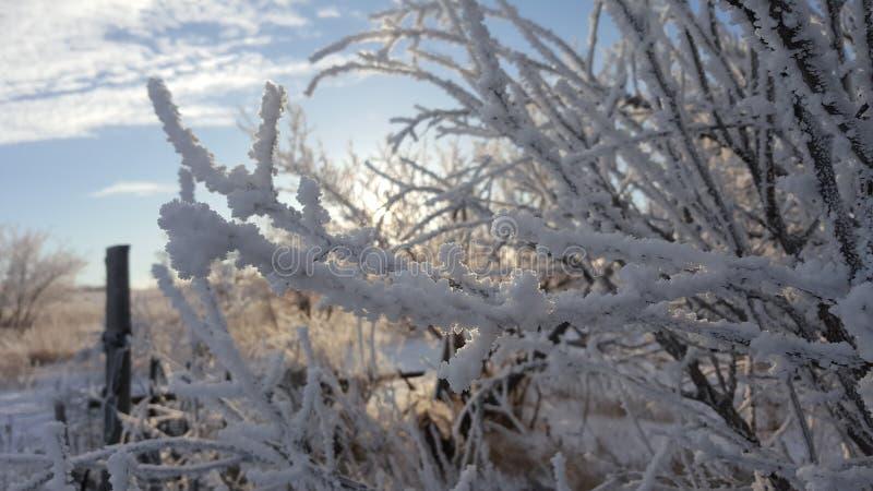 Belle barrière en bois en hiver Planches couvertes de neige Contre le contexte des buissons et des arbres répandus avec la neige images stock
