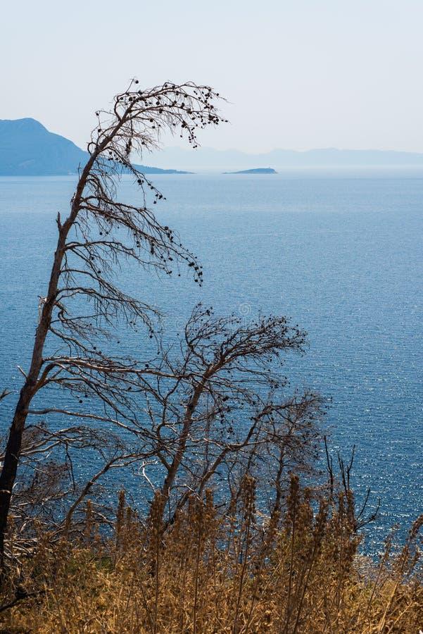 Belle côte dalmatienne, Trstenik, Dalmatie, Croatie, péninsule de Peljesac photographie stock
