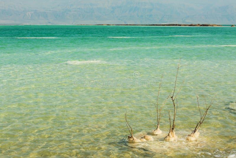 Belle côte de la mer morte photos libres de droits