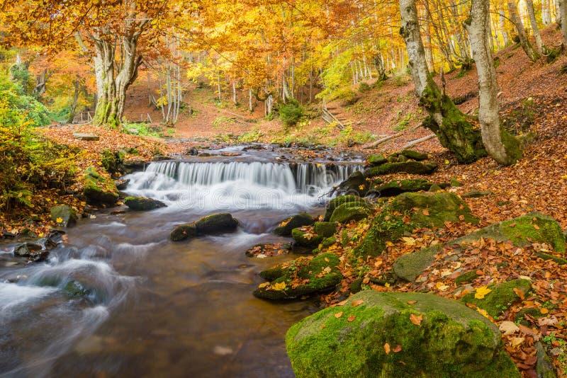 belle cascade à écriture ligne par ligne d'automne photographie stock
