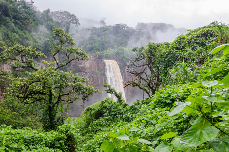 Belle cascade cachée d'Ekom profondément dans la forêt tropicale tropicale du Cameroun, Afrique photos stock